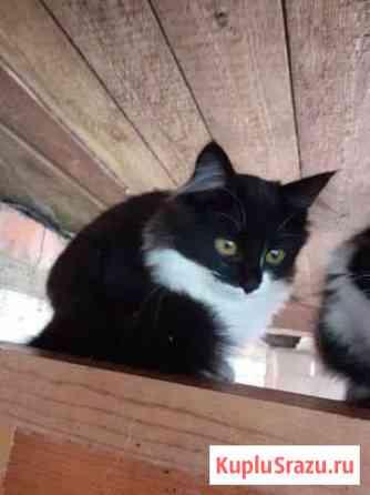 Котята от кошки-крысоловки Апрелевка