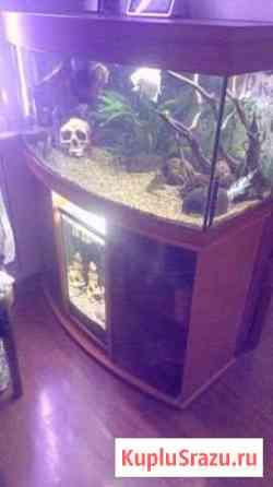 Панорамный аквариум с тумбой Протвино