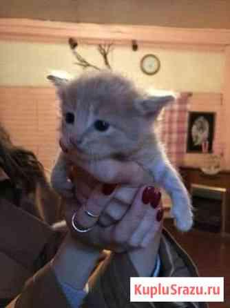 Котенок в добрые руки Жуковский