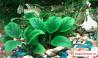 Аквариумные водоросли и рыбки