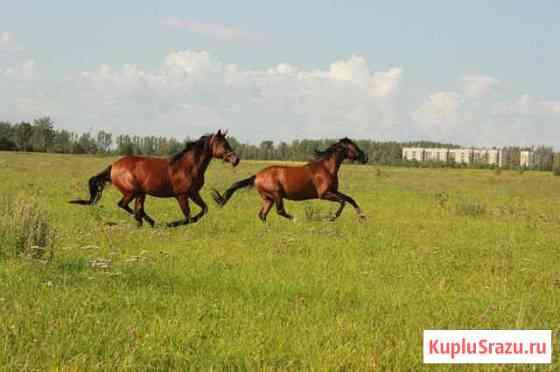 Доморощенные лошади Пушкин
