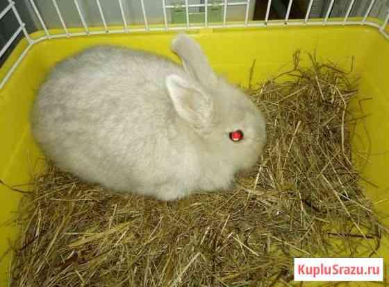 Продам кролика вместе с клеткой и лотком Сочи