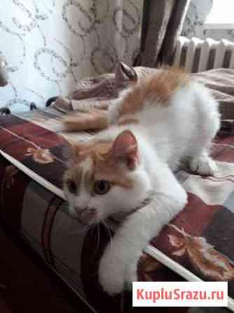 Брошенный котик ищет дом Казань