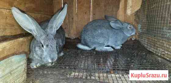 Кролики Казань