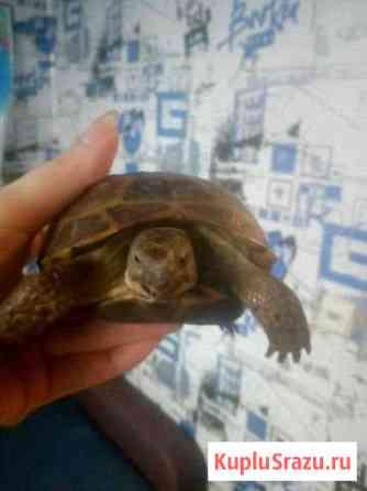 Черепаха Челябинск