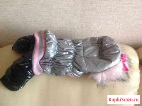 Одежда для собак Барнаул