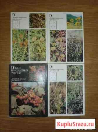 Лекарственные растения  18 штук, 1988год Бийск