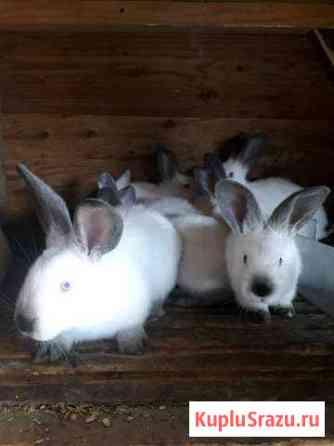 Кролик Белогорск