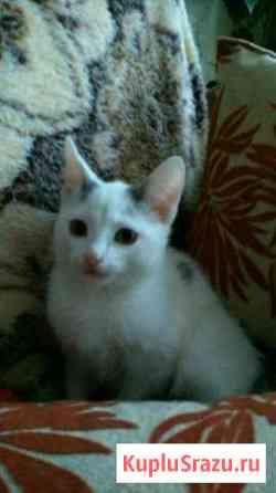 Отдам в добрые руки котёнка Рубцовск