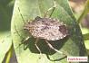 Уничтожение клопов, тараканов, мышей, комаров