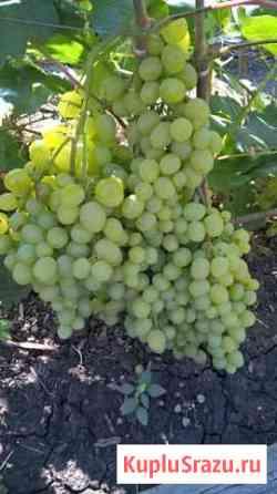 Виноград с лозы Белгород