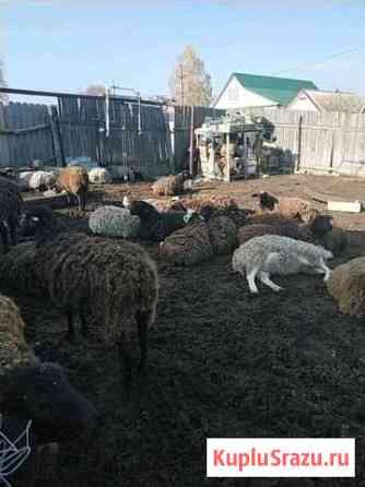 Овцематки Почеп