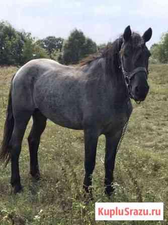 Лошадь Почеп