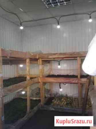 Продаю бизнес круглогодичное выращивание зелени Улан-Удэ