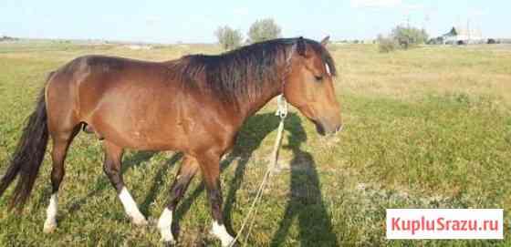 Лошадка, красавчик Волгоград
