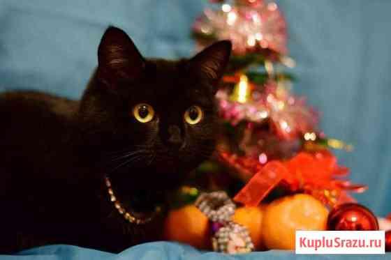 Черный котик Брюлик в добрые руки Воронеж