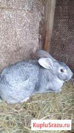 Кролики Латная