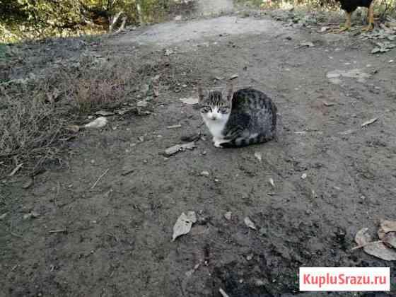 Кошки Магарамкент