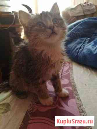 Котенок в добрые руки Слюдянка