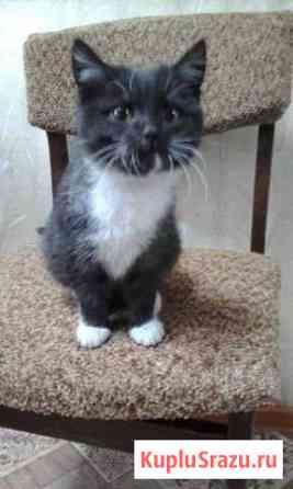 Котик ищет хозяина Черемхово