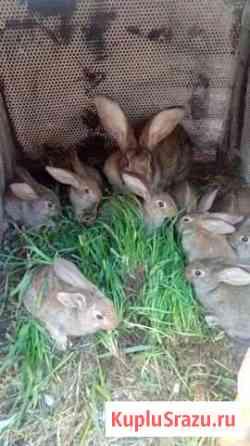 Продам крольчат Иркутск
