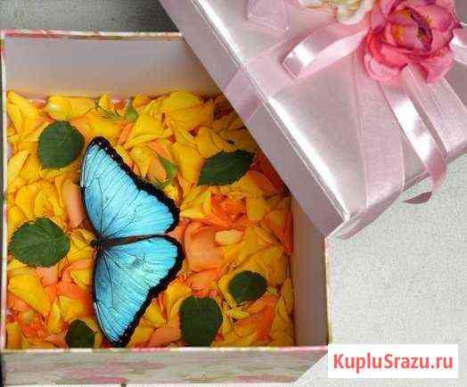 Живые тропические бабочки Иркутск
