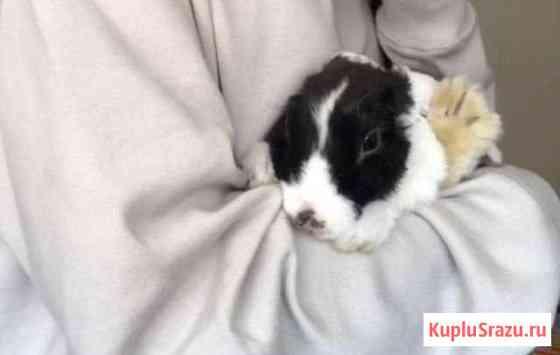 Кролик Иркутск