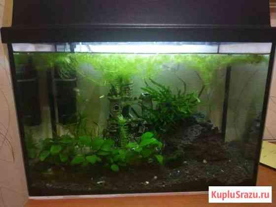 Аквариум с рыбками Петропавловск-Камчатский