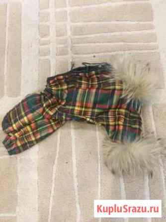 Одежда для собак Новокузнецк