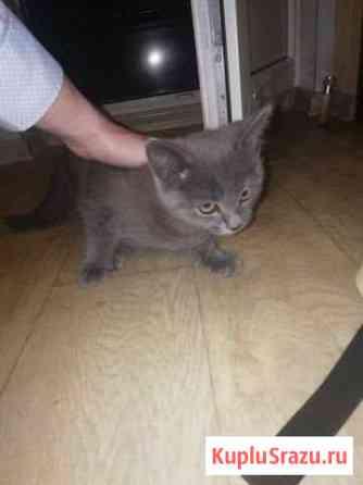 Котёнок Льгов