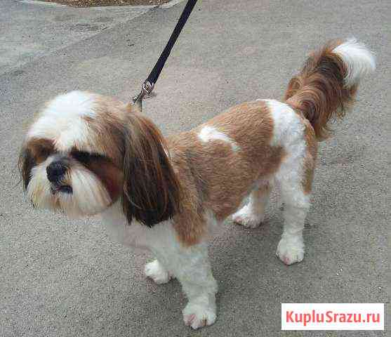 Стрижка собак Феодосия