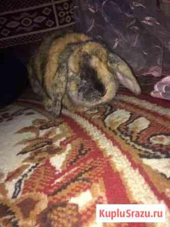 Кролик декларативный Курган