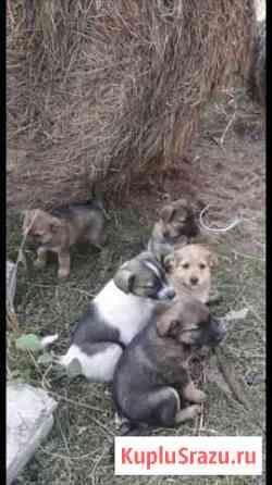 Собаки Курск
