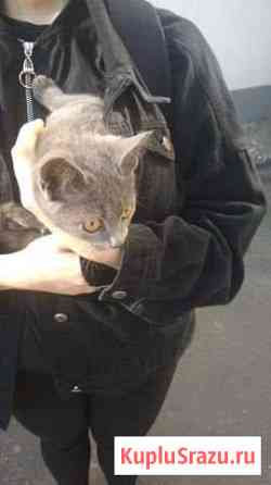 Отдадим котенка Железногорск