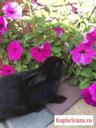 Кролик Ворошнево