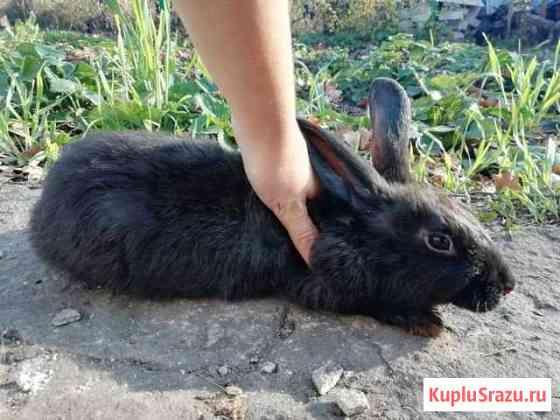 Продам замечательного кролика в хорошие руки Елец