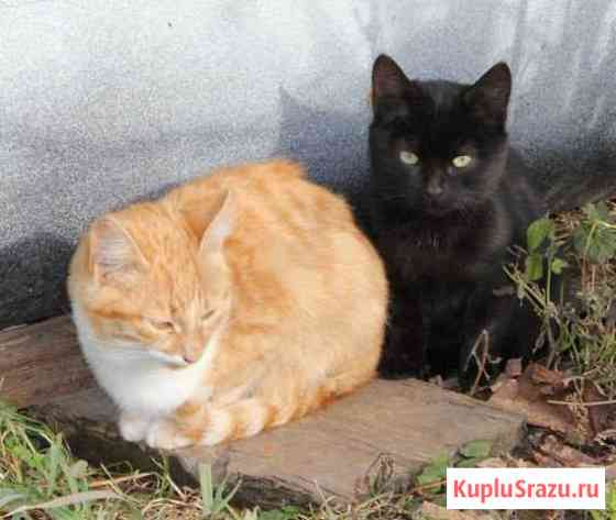 Котята ищут дом, спасите их Липецк