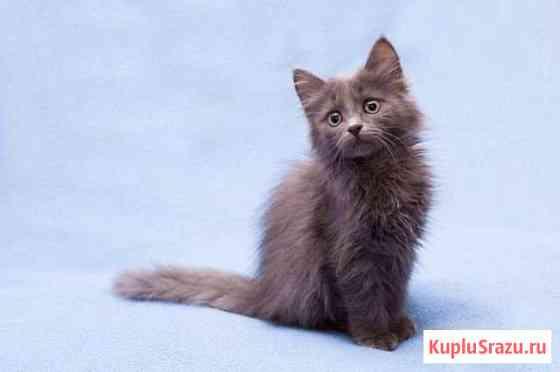 Котенок мальчик Липецк