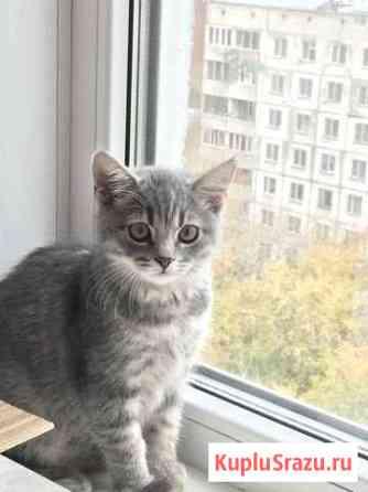 Кошечки Новосибирск