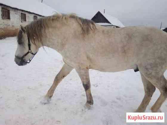 Лошади Саранск
