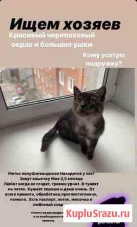 В добрые руки замечательный котенок Новосибирск