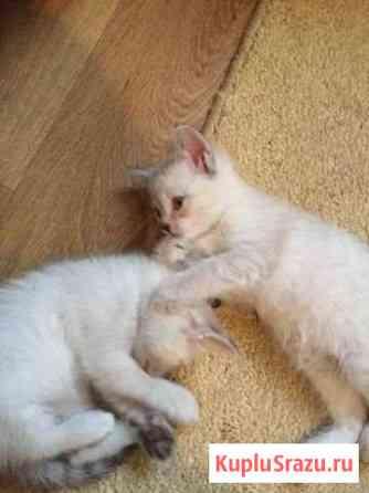 Кошки Новосибирск