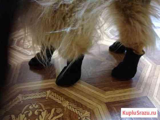 Обувь для собак Новосибирск