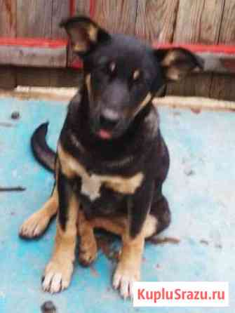 Самый ласковый щенок в мире мальчик 3 месяца Пермь