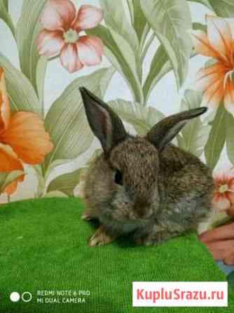 Декоративные кролики Пермь