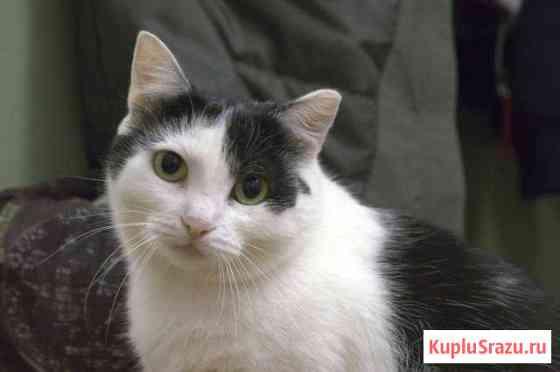 Кошка в добрые руки Чусовой