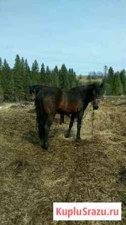 Лошадь Чусовой
