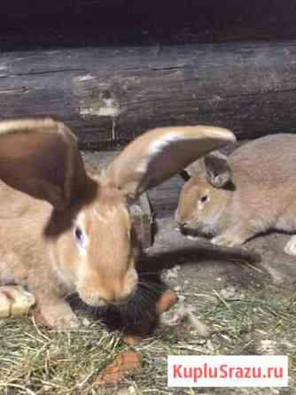Кролики Горно-Алтайск