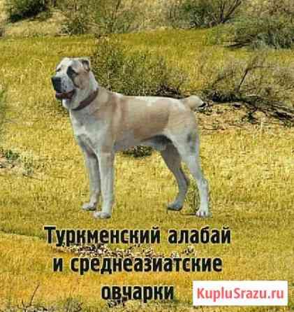 Щенки Среднеазиатской овчарки Елатьма