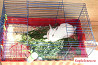 Кролик со всем своим имуществом